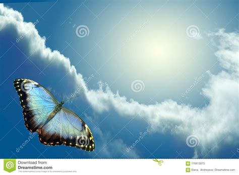 Butterfly flying to sky stock image