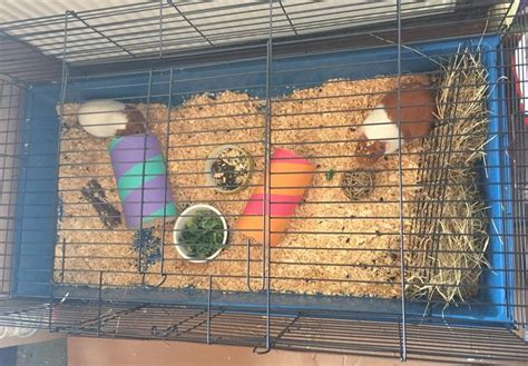 Cages – Morley Small Pet Boarding